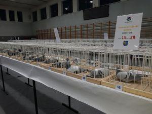 Wystawa Oddziałowa 2018